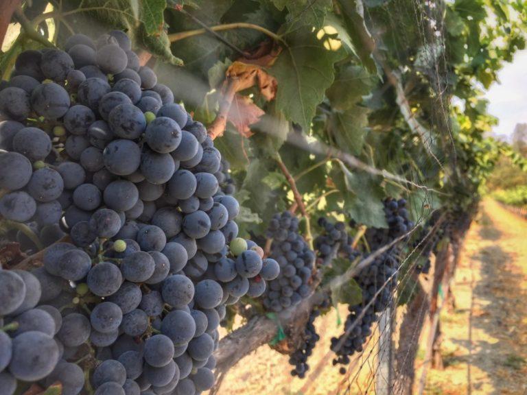 advocate grapes
