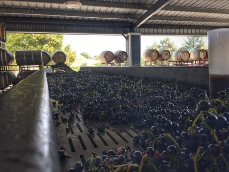 epicurean grapes